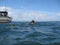 イルカに遊ばれる♪