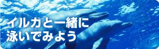 イルカと泳いでみよう